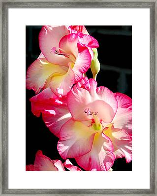 Gladiolas Framed Print by Tony Ramos