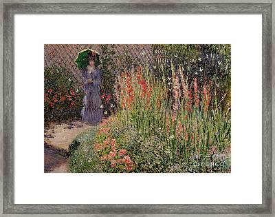 Gladioli Framed Print