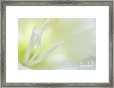 Gladioli Stamen Framed Print