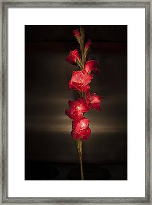 Framed Print featuring the photograph Gladioli_variation#4 by Richard Wiggins