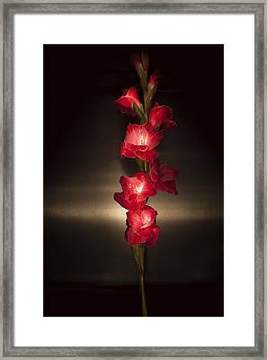Framed Print featuring the photograph Gladioli_variation#8 by Richard Wiggins