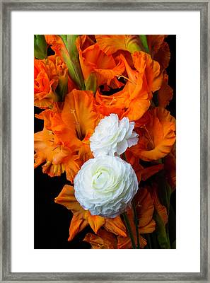 Glads And Ranunculus Framed Print by Garry Gay