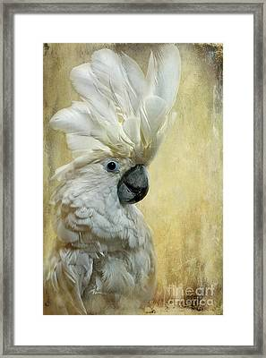 Glamour Girl Framed Print