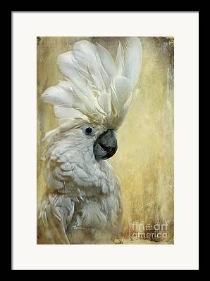 White Cockatoo Framed Prints