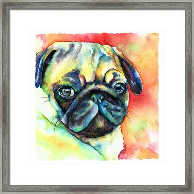 Glamour Pug Framed Print by Christy  Freeman