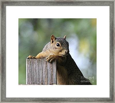 Glamour Shots - Squirrel Portrait Framed Print