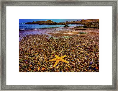 Glass Beach Starfish Framed Print