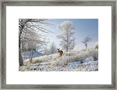 Framed Print featuring the photograph Glen Shiel Misty Winter Deer by Grant Glendinning