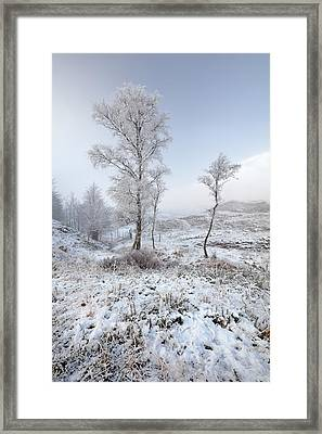 Framed Print featuring the photograph Glen Shiel Misty Winter Trees by Grant Glendinning