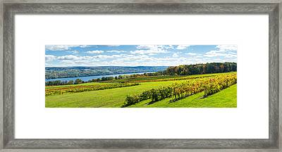 Glenora Vineyard, Seneca Lake, Finger Framed Print by Panoramic Images