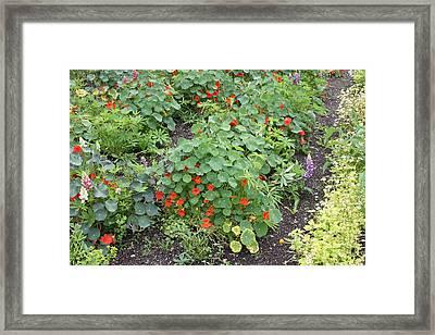Glenveagh Castle Gardens 4278 Framed Print