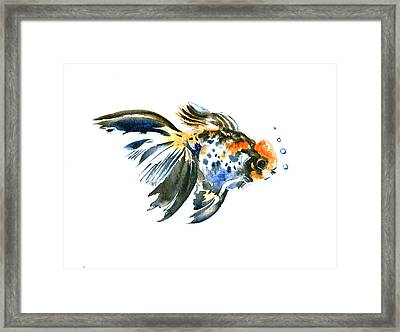 Goldfish Framed Print by Suren Nersisyan