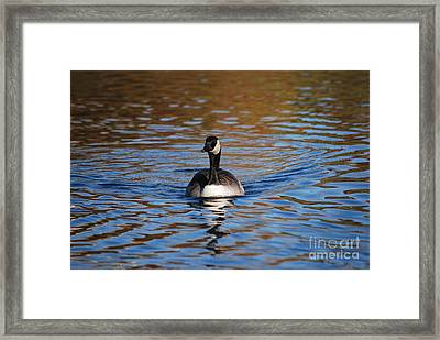 Glide Framed Print by Joy Bradley