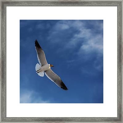 Glider Framed Print