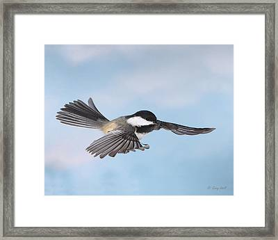 Gliding Framed Print by Gerry Sibell