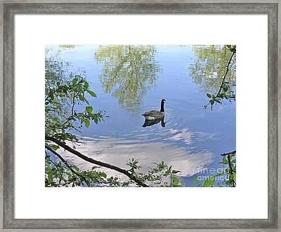 Gliding Goose Framed Print