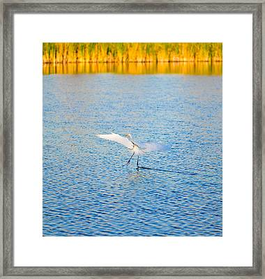Gliding Framed Print by Mandy Wiltse