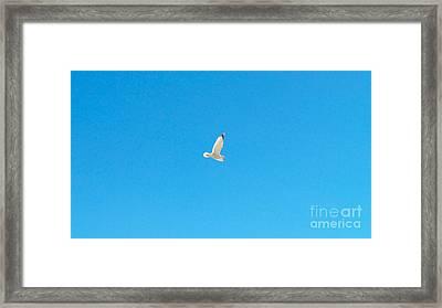 Gliding Seagull Framed Print