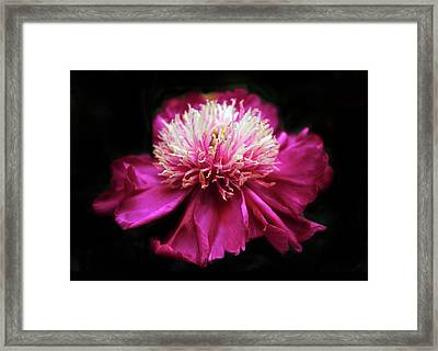 Glimmer In The Dark Framed Print by Jessica Jenney