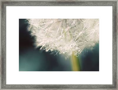 Framed Print featuring the photograph Glisten by Amy Tyler