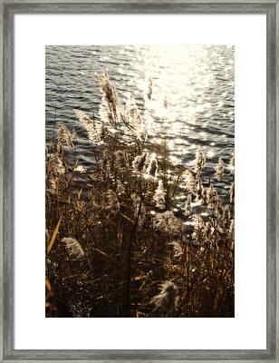 Glisten Framed Print by Ariane Moshayedi