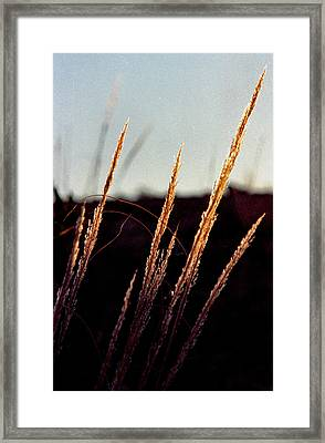 Glistening Grass Framed Print