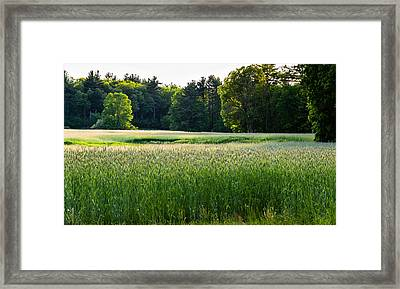 Glistening Green Framed Print