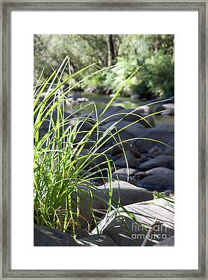Framed Print featuring the photograph Glistening In The Sunlight by Linda Lees