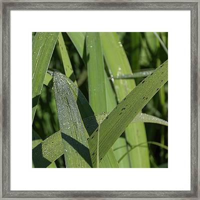 Glittery Leaves Squared Framed Print