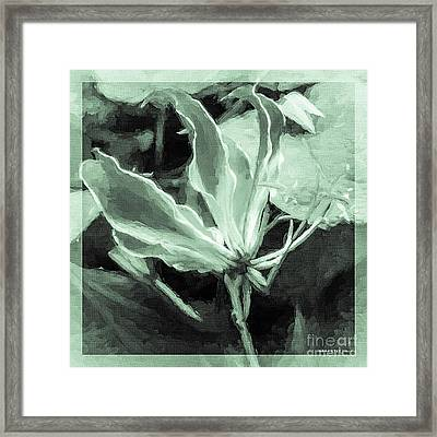 Gloriosa Superba Flame Lily Going Green Framed Print