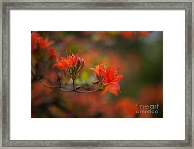 Glorious Blooms Framed Print by Mike Reid