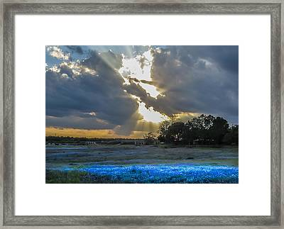 Da211 Glorious Bluebonnet Sunset By Daniel Adams Framed Print