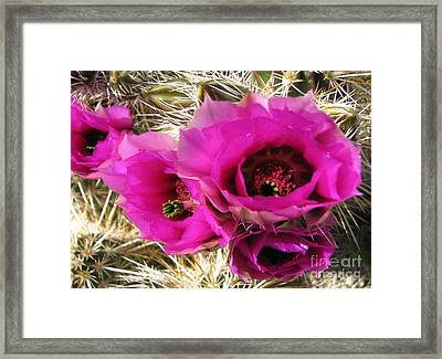 Glorious Color Framed Print