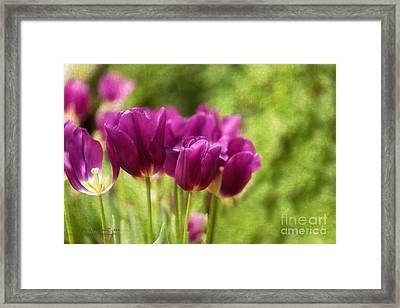 Glorious Days Framed Print