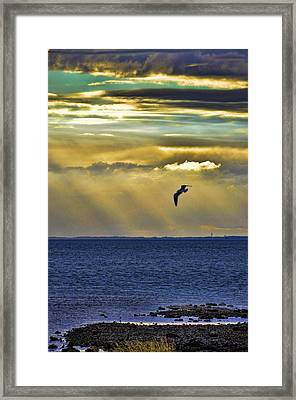 Framed Print featuring the photograph Glorious Evening by Jan Amiss Photography