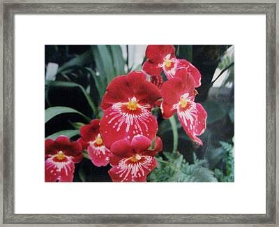 Glorious Fleur Framed Print by Judyann Matthews