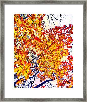 Glorious Foliage Framed Print