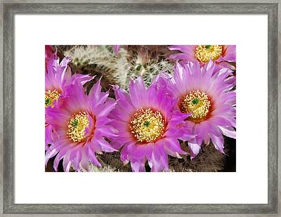 Glorious In Pink Framed Print