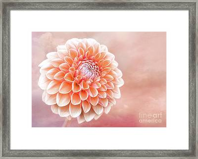 Glorious Salmon Dahlia Framed Print