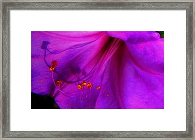 Framed Print featuring the photograph Glory And Hallelujah by Lenore Senior