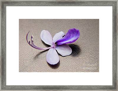 Glorybower Patio Tree Flower Framed Print by Julia Hiebaum
