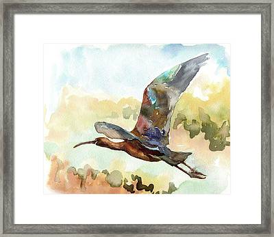Glossy Ibis Framed Print
