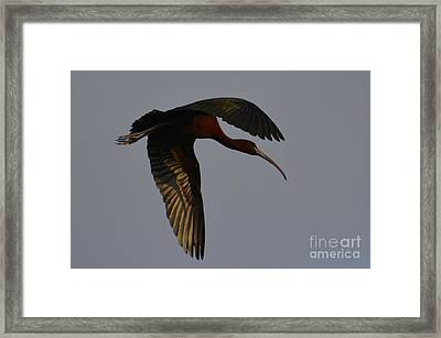 Glossy In Flight Framed Print by Don Columbus
