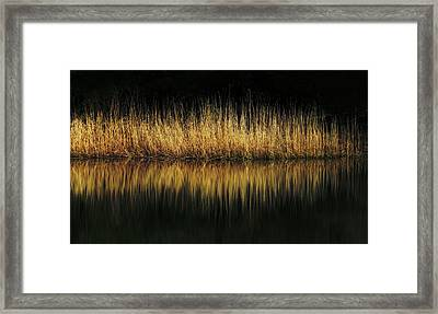 Glow And Reflections At Lakes Edge Framed Print