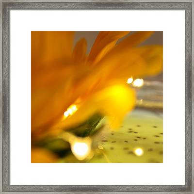 Framed Print featuring the photograph Glow by Bobby Villapando