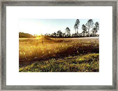 Framed Print featuring the photograph Glow by Eric Christopher Jackson