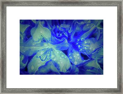 Glow In The Dark After The Rain  Framed Print