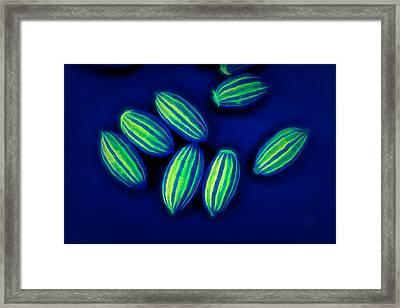 Glow In The Dark Framed Print