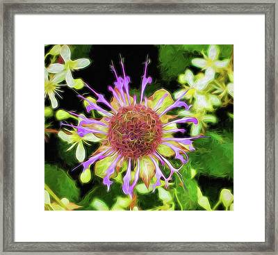 Glow Mountain Wildflower Framed Print by Cindy Archbell
