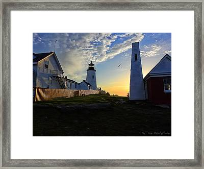 Glow Of Morning Framed Print